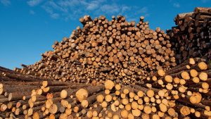 U.S. moves to double tariffs on Canadian softwood lumber imports