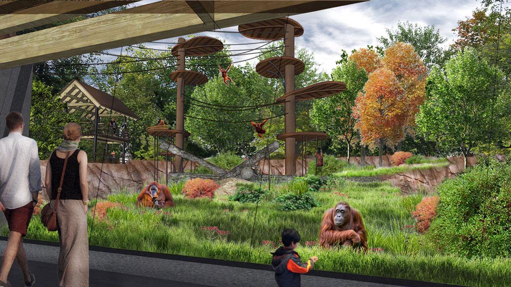 Orangutans to climb higher at Toronto zoo thanks to steel