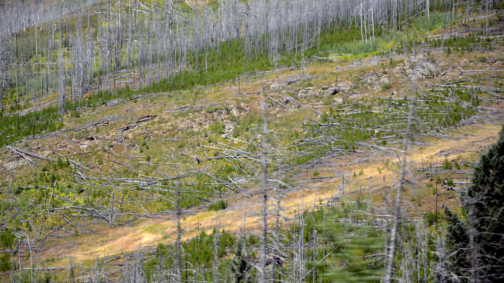 Alberta wins lumber tariff battle with U.S.
