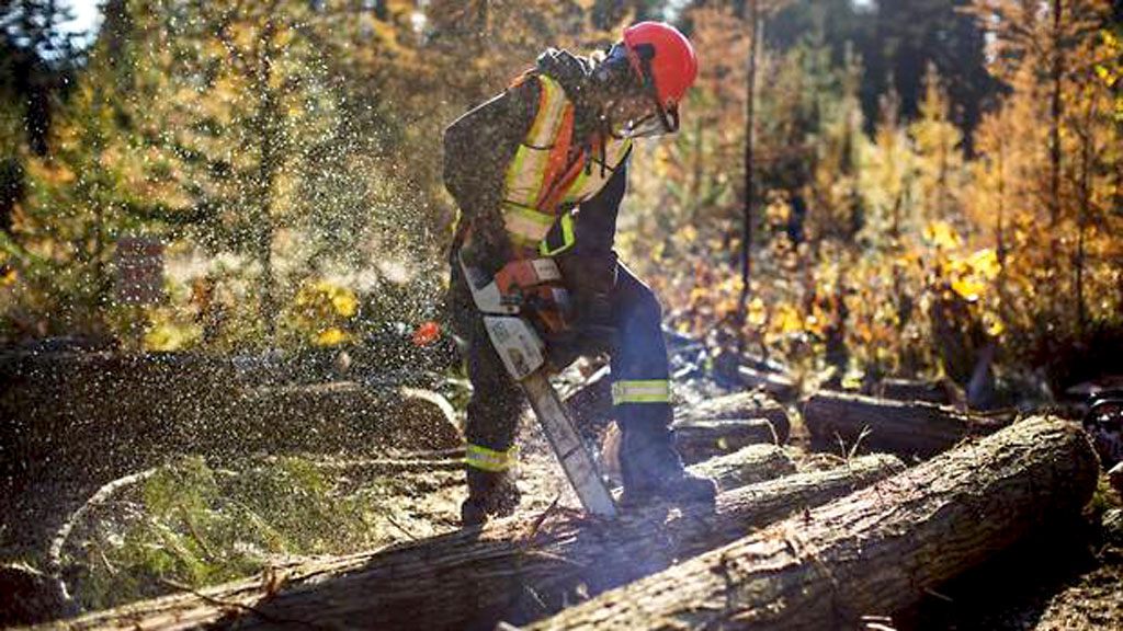 COVID-19 relief coming to forestry companies