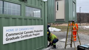 New cannabis research bunker built at Niagara College