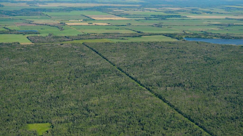 Alberta awards areas for timber cutting
