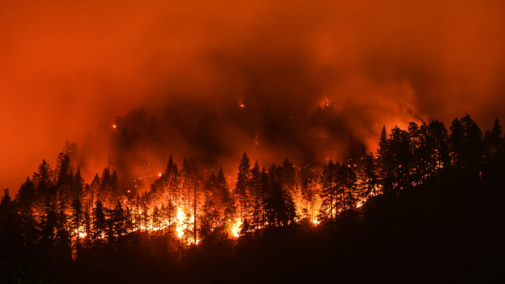 Number of wildfires burning in B.C. down slightly from a week ago
