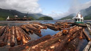 B.C. announces changes to help struggling forest-sector contractors