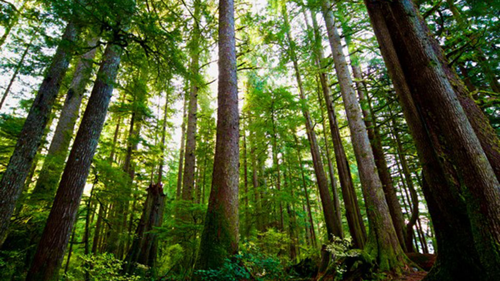 Industry Special: Forest Ecosystems and Mother Trees: the Science of Reforestation in B.C.
