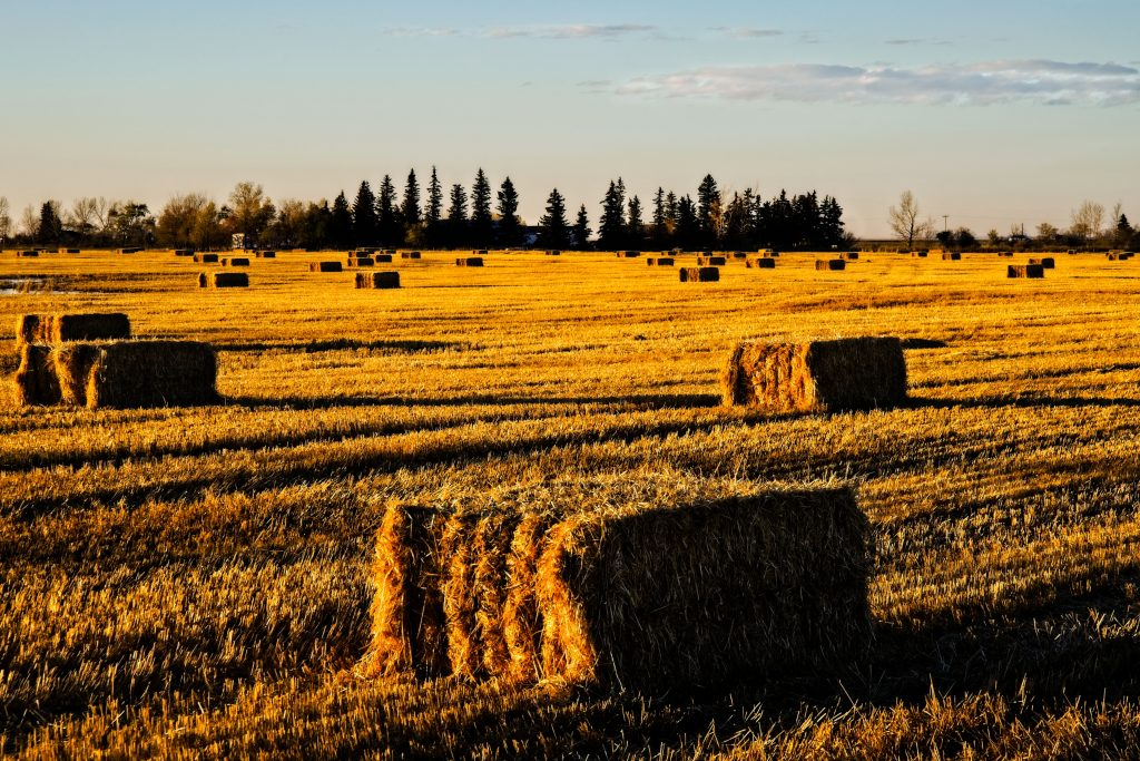 Allnorth engineering Canada's first $350 million straw pulpmill