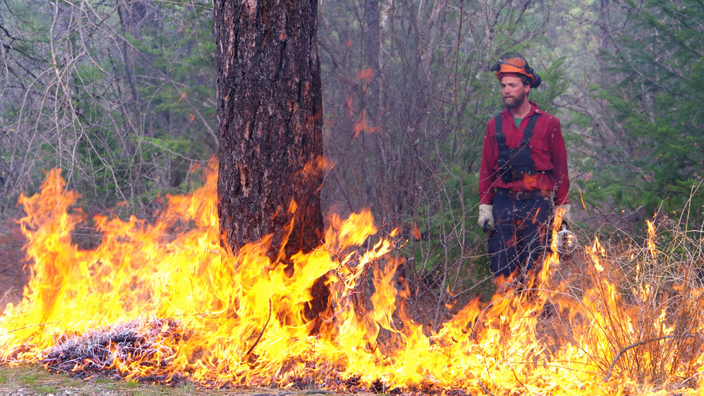 UBC prof: Fires, beetles and climate put B.C. forestry in jeopardy