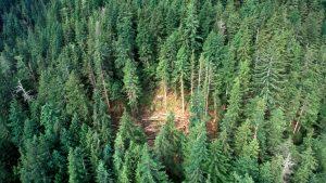 Legislation aims to change B.C. forestry